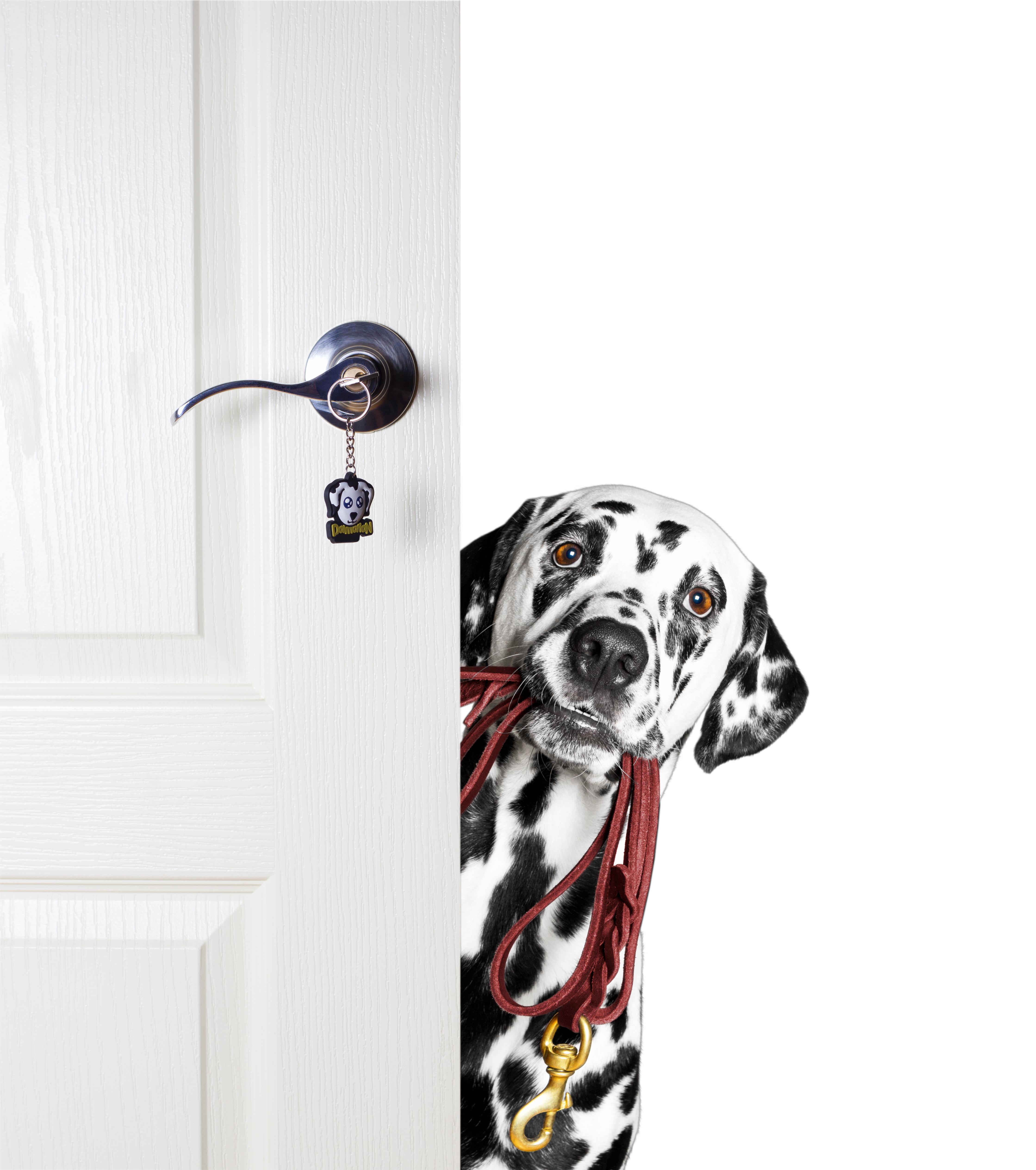 Board your Dog at Marietta Doggy Daycare