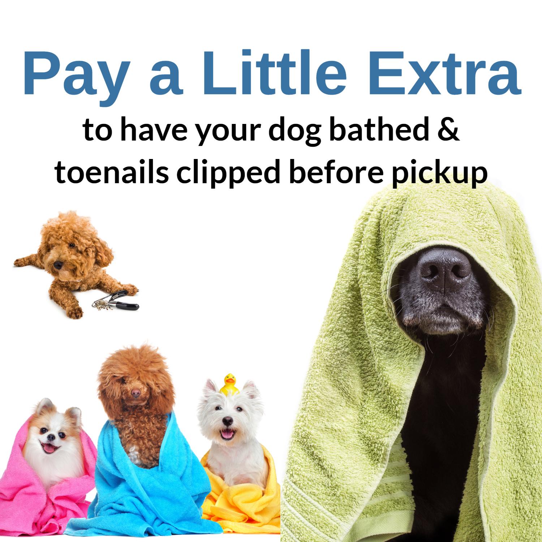 Best Dog Baths in Marietta, GA